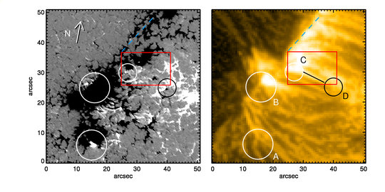 A look at the footprints of coronal loops. Images obtained by NASA's Solar Synamics Observatory (right) on June 12th, 2013 show distinct plasma flows in the Sun's corona. Sunrise II data documents the magnetic fields that were present on the Sun at the same time and in the same place (left). Small regions, in which the magnetic polarity is opposite to that of the overall environment prove to be the origins of the loops.