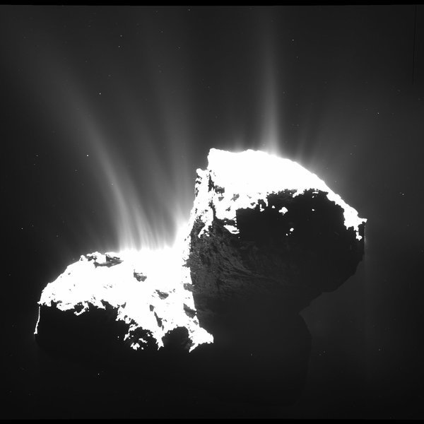 Global distribution and dynamics of dust near comet 67P/Churyumov-Gerasimenko